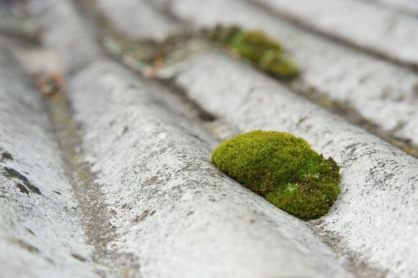 patch of moss on old metal roof