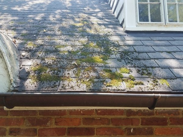scattered moss on grey roof tiles