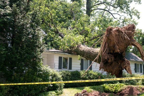 A huge tree fell on a house after a severe storm came